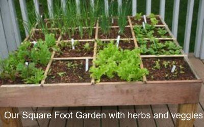 1000 Images About Food Garden On Pinterest Herbs Garden Herbs And Raised  Beds