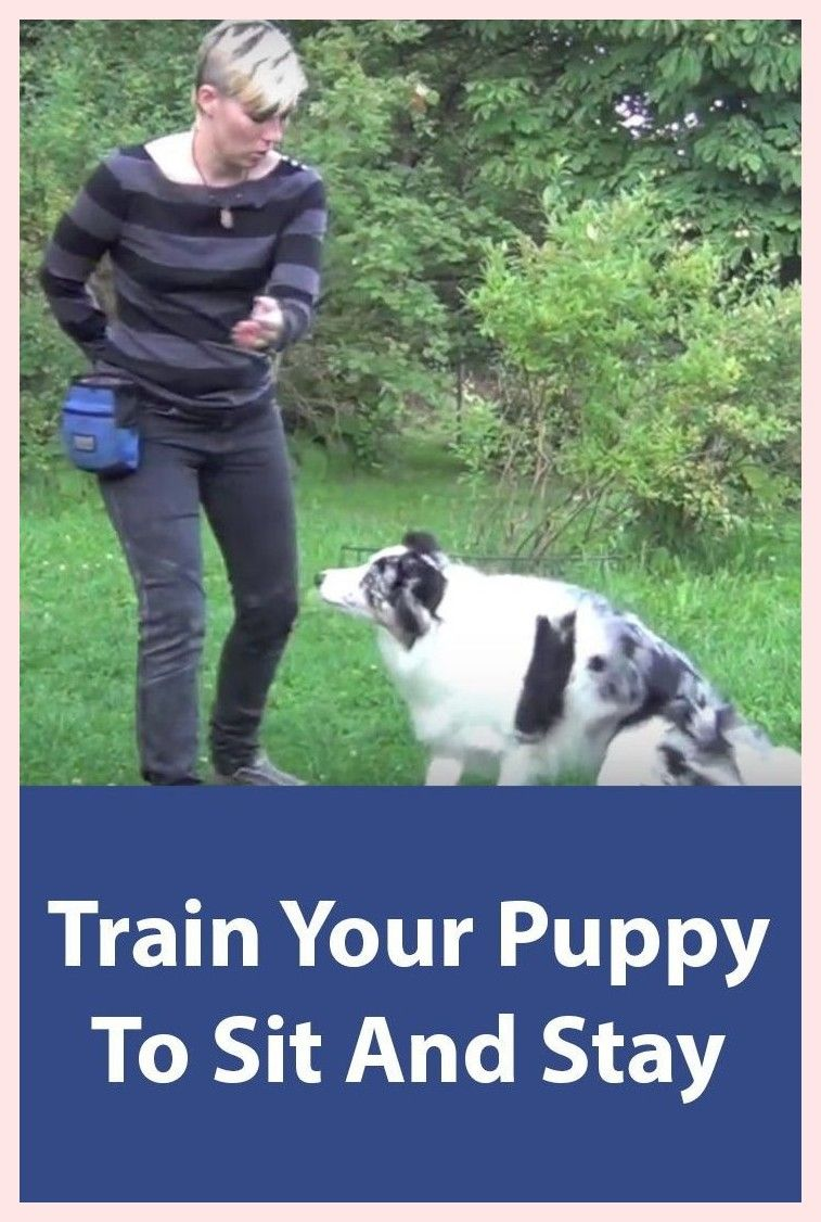 Ensene A Su 45de5b01f3efb6 Dog Training Training Your Puppy