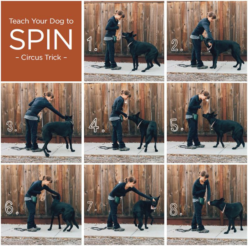 Teach Your Dog To Spin Dog Training Dogs Dog Agility