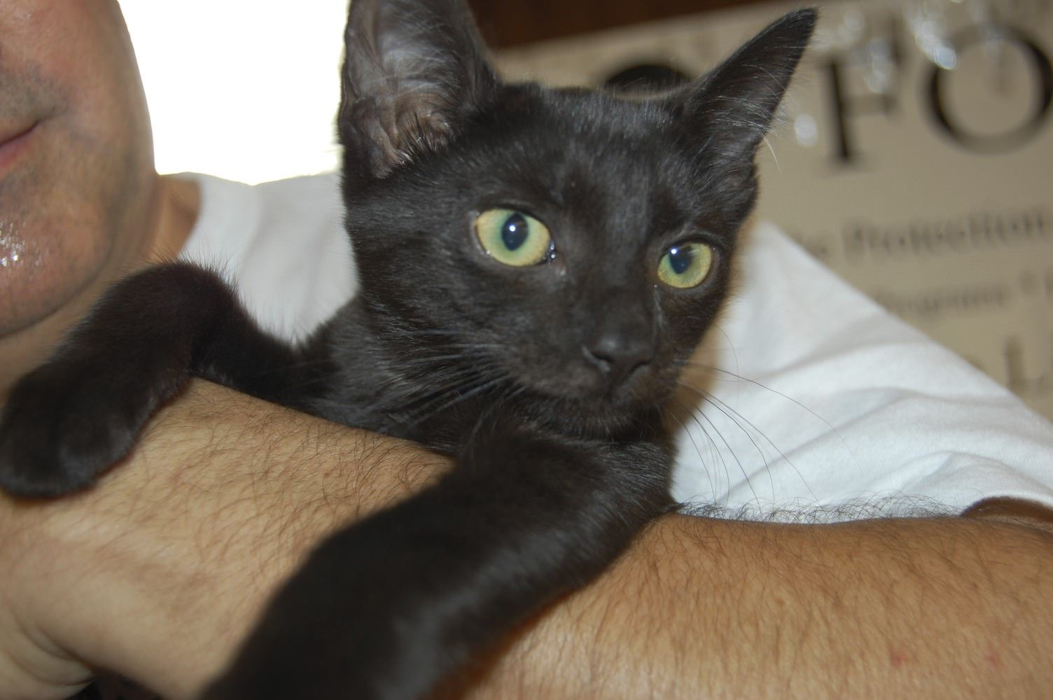 This black cat is one of many cats and kittens that were