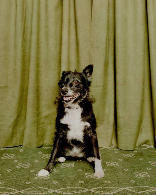 billyandhells Tierheim BerlinHohenschönhausen 2014 Dog