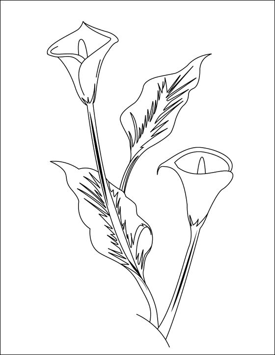 Flower Page Printable Coloring Sheets Arum Lily Coloring And Printable Page Coloring Pages Arum Lily Flower Coloring Pages Lilies Drawing