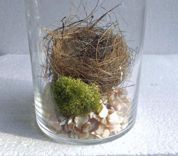 FINCH NEST in Apothecary Jar  Real Nest  by NaturalWoodland,
