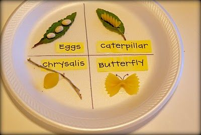Recreation of butterfly life cycle from noodles, leaves, twigs, etc.