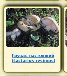 Съедобные грибы с фото и описаниями | в лукошке