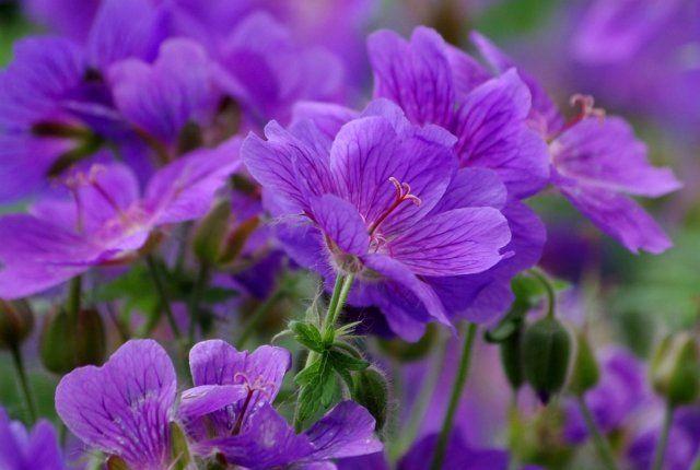 Как красиво оформить цветник, или Правила сочетания цветов ...