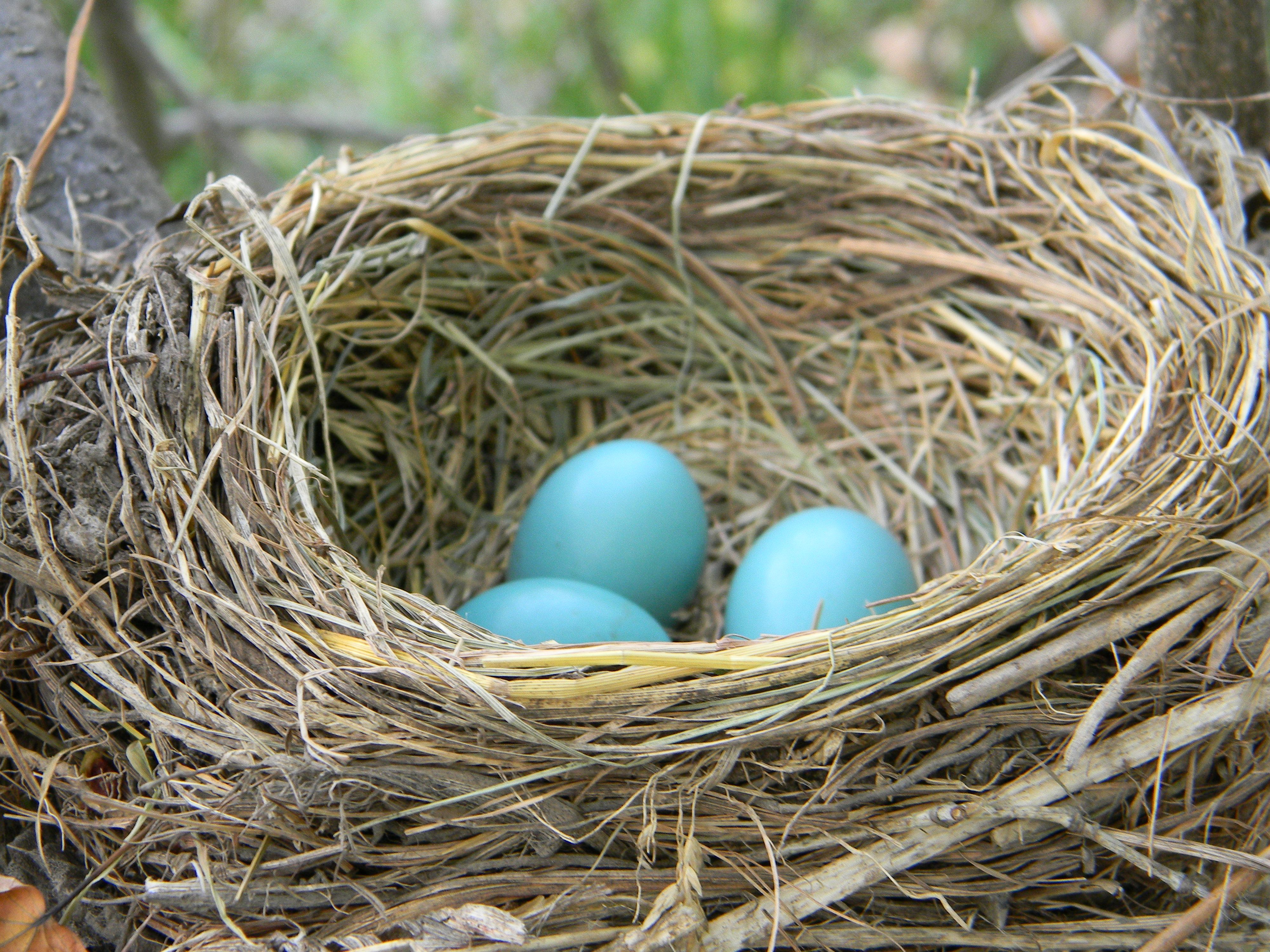 Examples of Nest and Eggs - How Tos