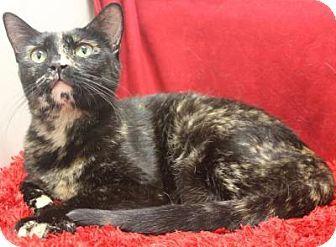 Blackwood Nj Domestic Shorthair Meet Fantasia A Cat For Adoption Cat Adoption Kitten Adoption Pets