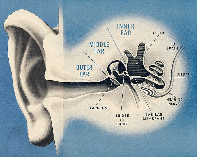 f3fa1df0c1041663346ccb08bcf291a3 - How Long To Get Hearing Back After Ear Infection