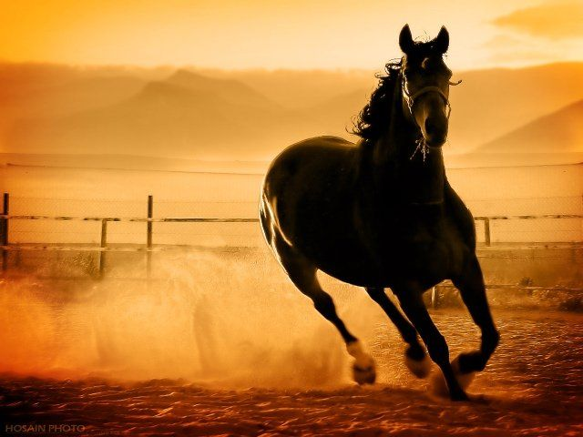 مدونة الشرق الاوسط للصور صور احصنة خيول 3 Horses Horse Pictures Show Horses