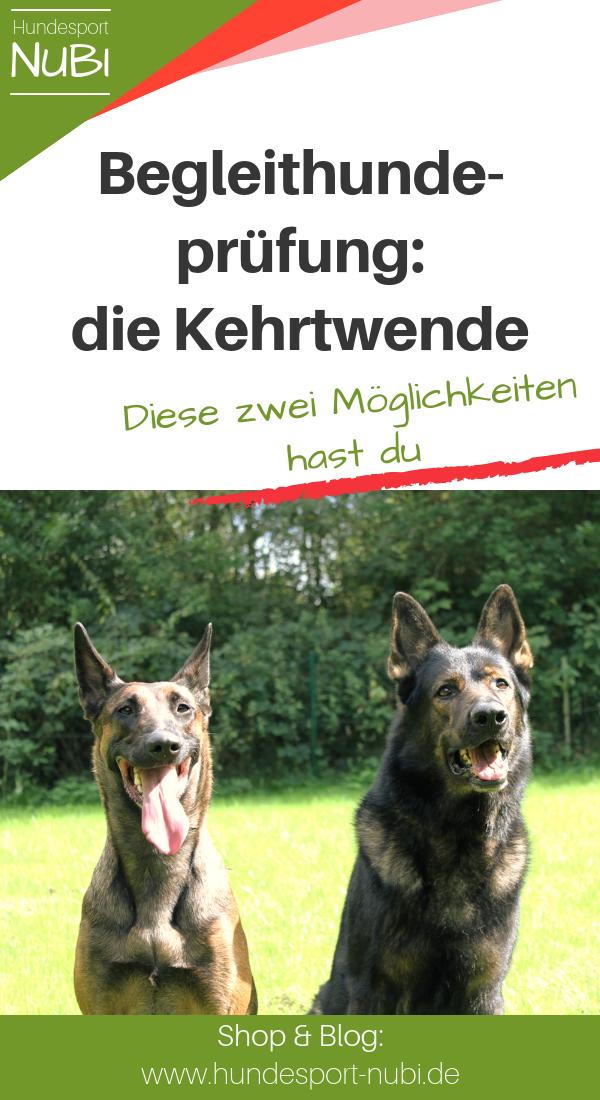 Vom Welpen Zum Begleithund Teil Neun Hundesport Begleithund Hunde