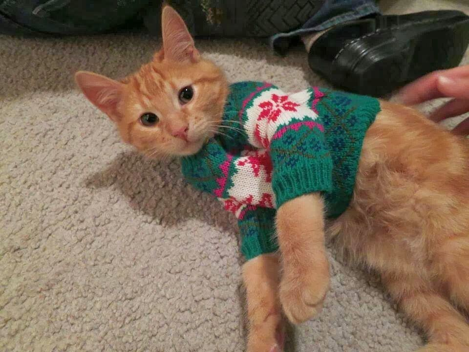 21 Pets That Are All Dressed Up In Sweaters For The Holidays, Whether They Like It Or Not