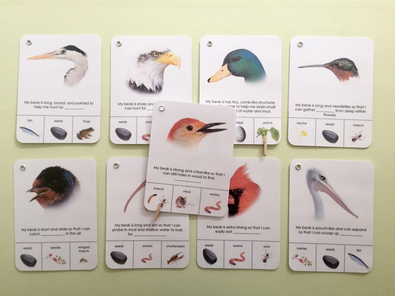 Beak Adaptation Study Materials Montessori Materials For