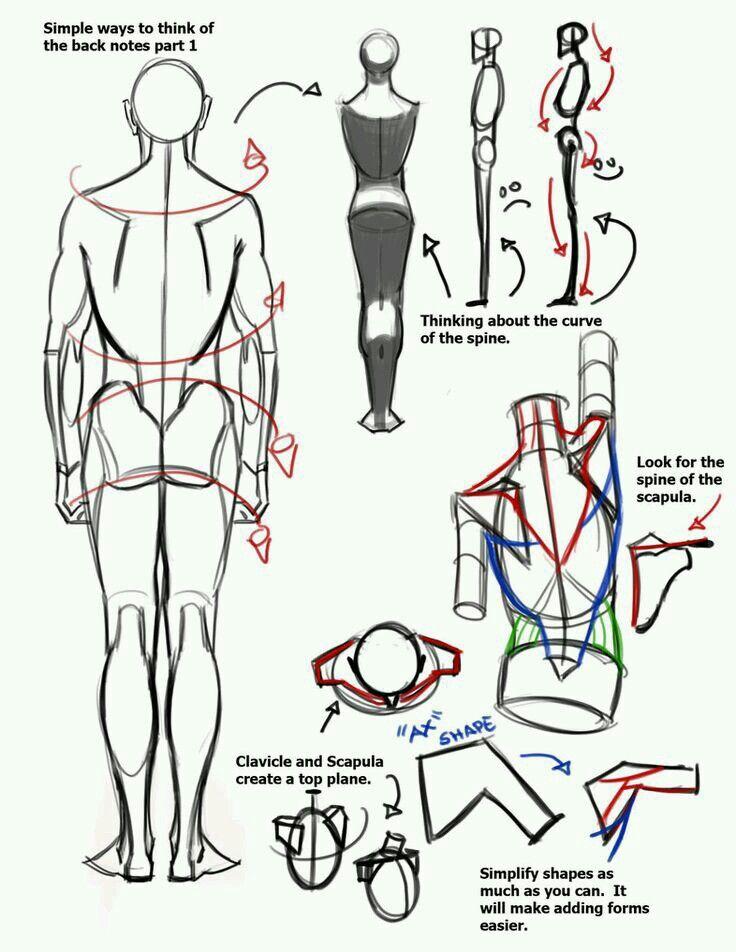 Medidas | Drawing tips | Pinterest | Anatomía