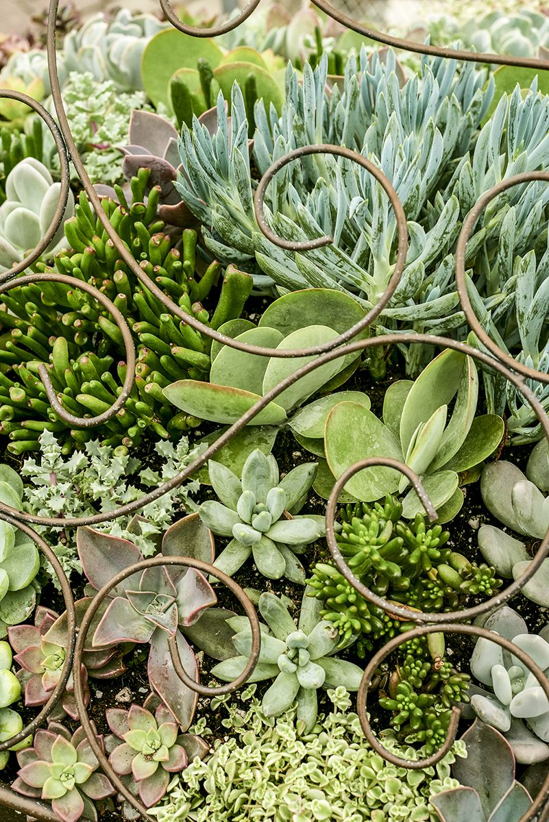 Succulents home-grown and planted in-house in a marvelous piano planter.