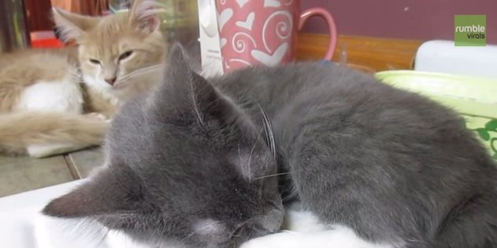 Kitten Attempts To Sleep While His Brother Snores
