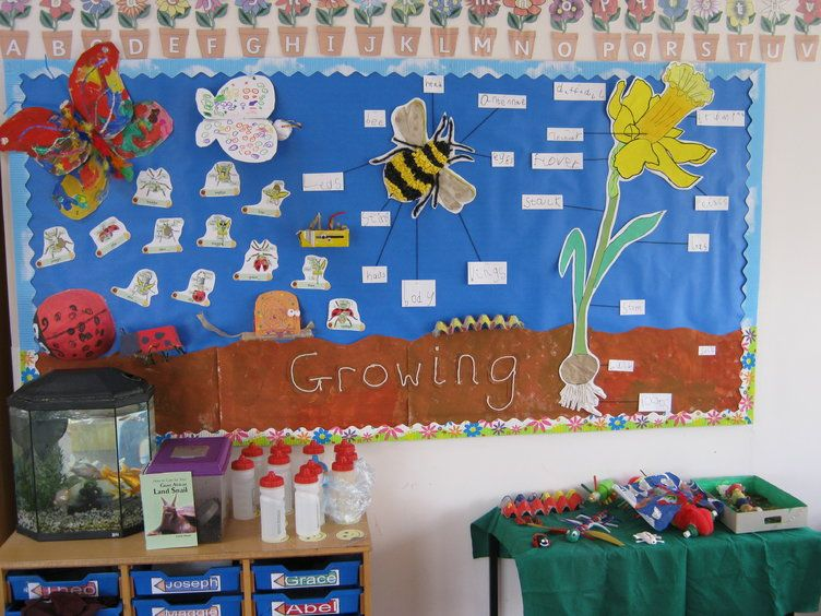 Growing Display, classroom display, class display, Plants