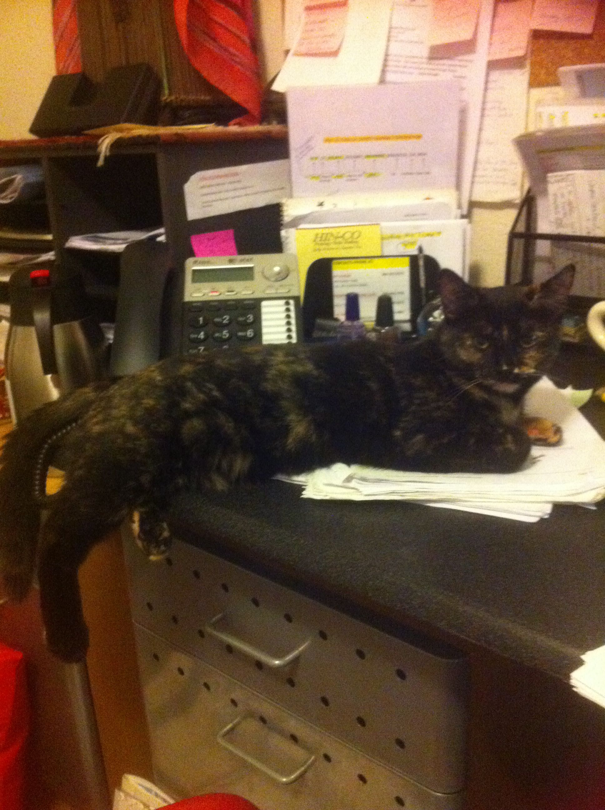 My Office Assistant Taz