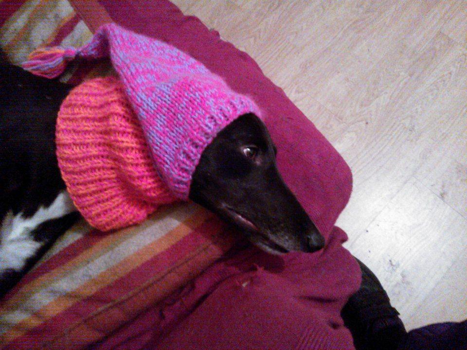 Greyhound Tassel Hat knitting pattern | Snood knitting ...