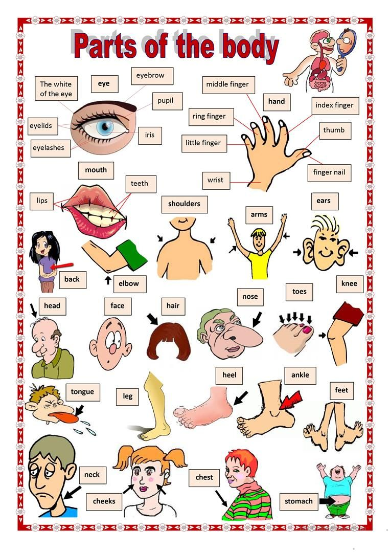 worksheet Parts Of The Body Esl Worksheet parts of the body 1 worksheet free esl printable worksheets made by teachers