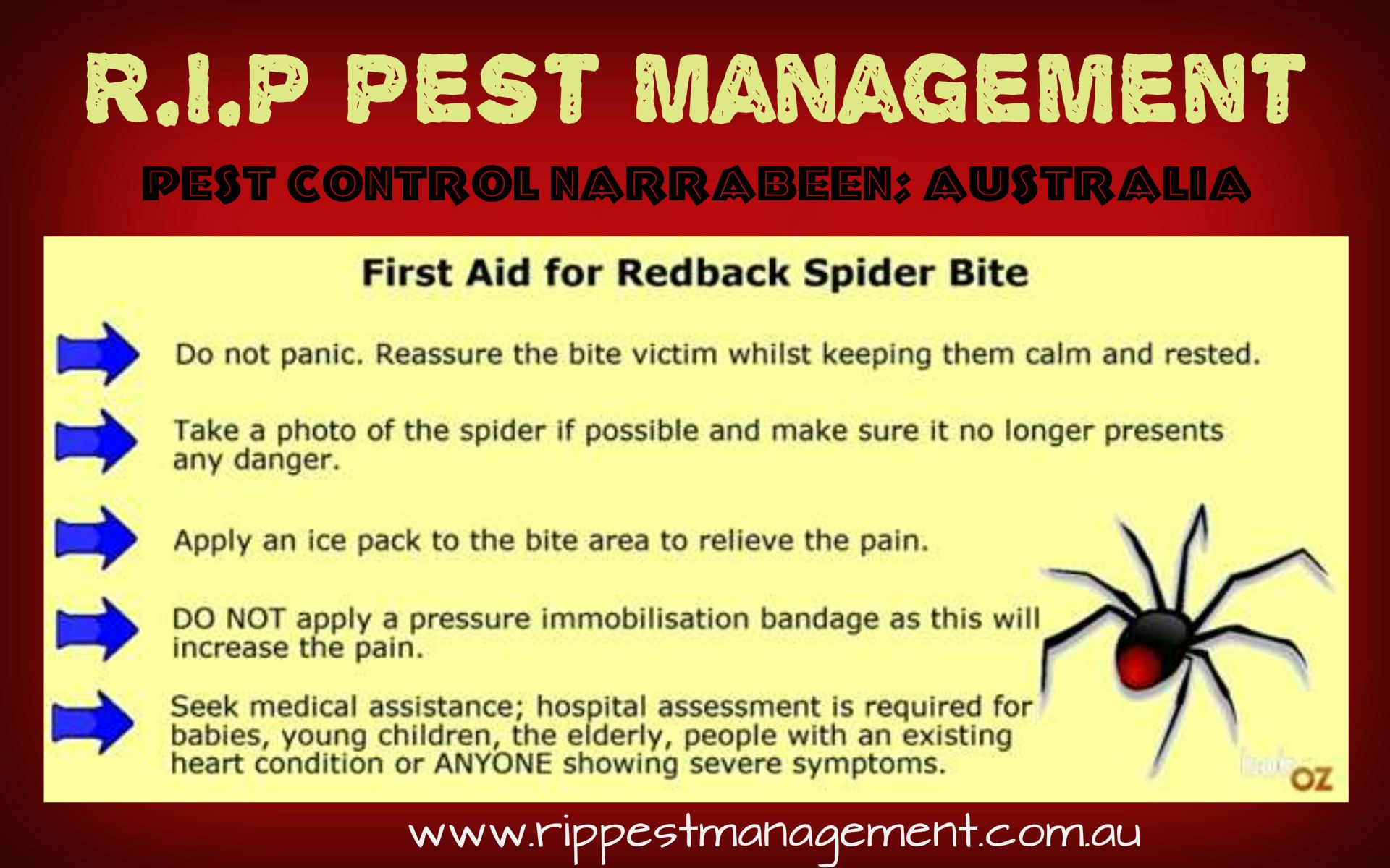 First Aid tips for Redback Spider Bite