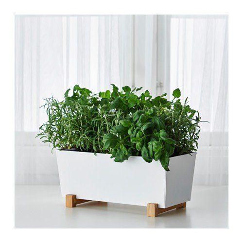 IKEA BITTERGURKA Übertopf in weiß; (32x15cm): Amazon.de ...