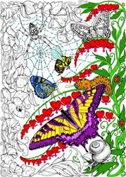 Spider Butterfly