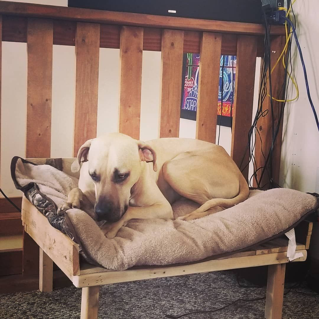 10 DIY Recycled Wood Pallet Dog Bed New Designs   Recycled ...