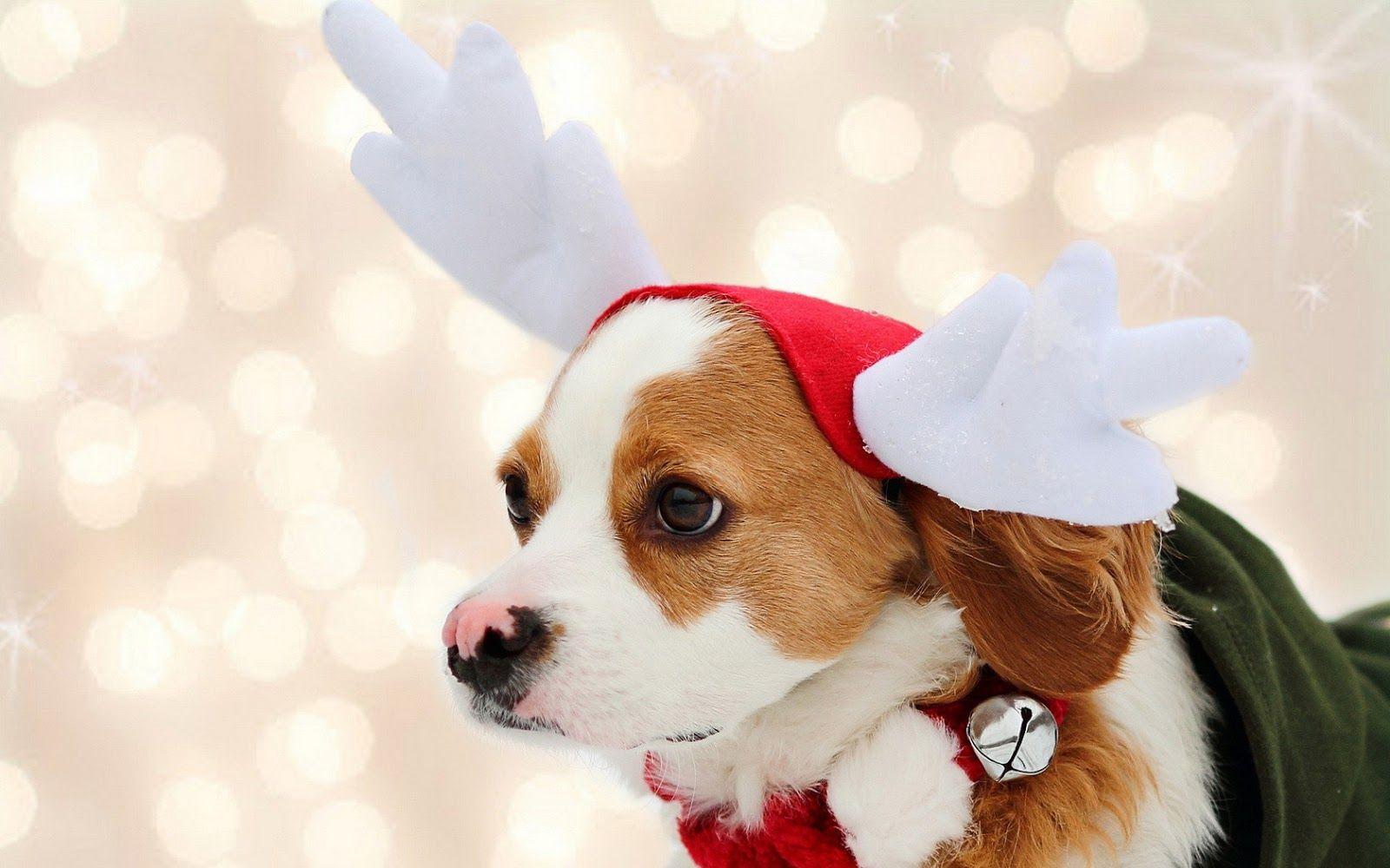 Baby Dog Wearing Christmas Cap Wallpaper Animals