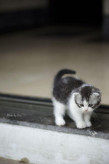Kitten, cats, Katze
