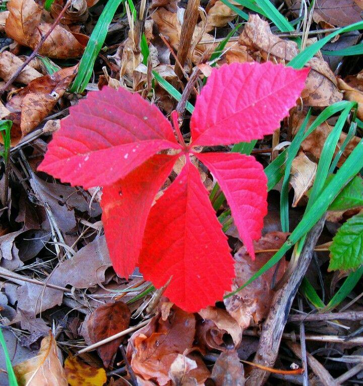 Pin by William Wilson on Autumn Plants, Autumn