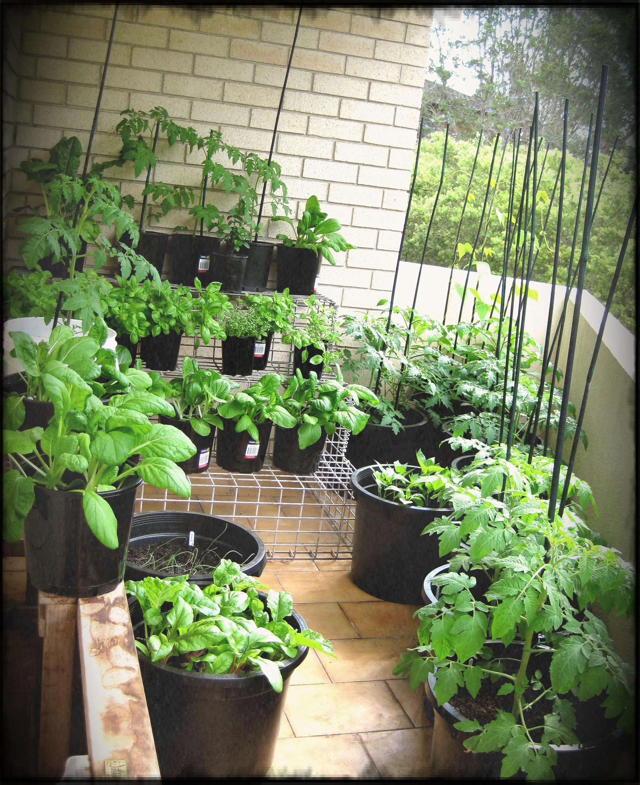 Urban Vegetable Gardening For Beginners: So In Seed Selection The Entire Plant Is To Be Thought