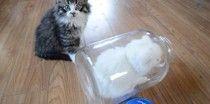 Fluffy Kitten Plays Hide-And-Seek In A Glass Jar