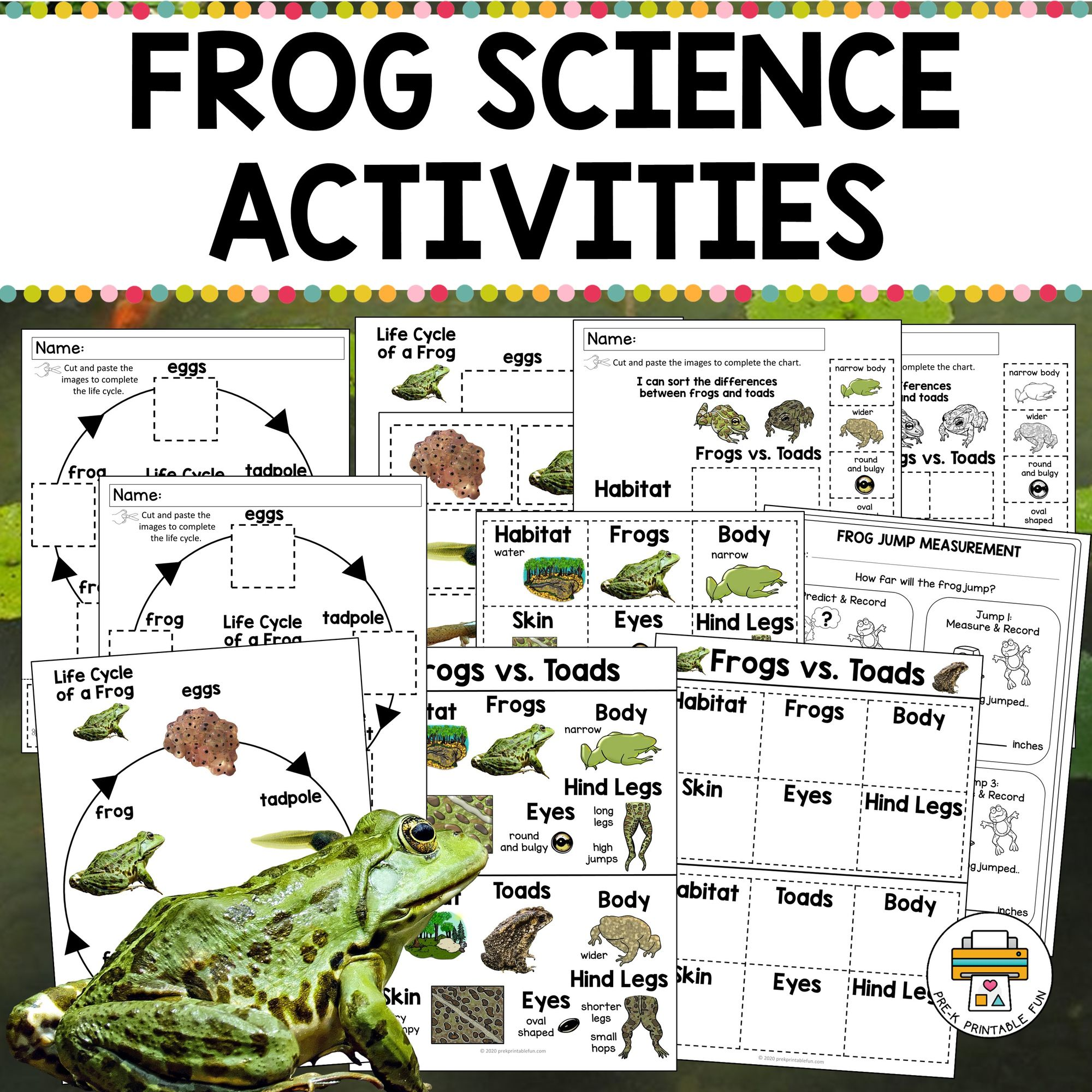 Check Out These Awesome Frog Science Activities For