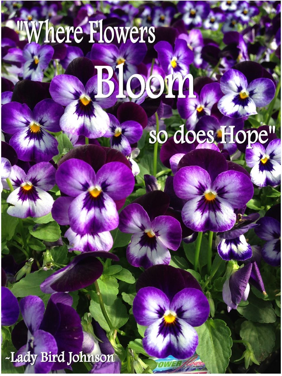 Power Flowers Our Favorite Gardening Quotes Garden Quotes Bloom Where Youre Planted Pansies Flowers