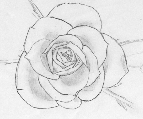 How To Draw A Fibonacci Flower For Kids