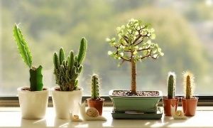 Ten extremely undemanding house plants for busy people