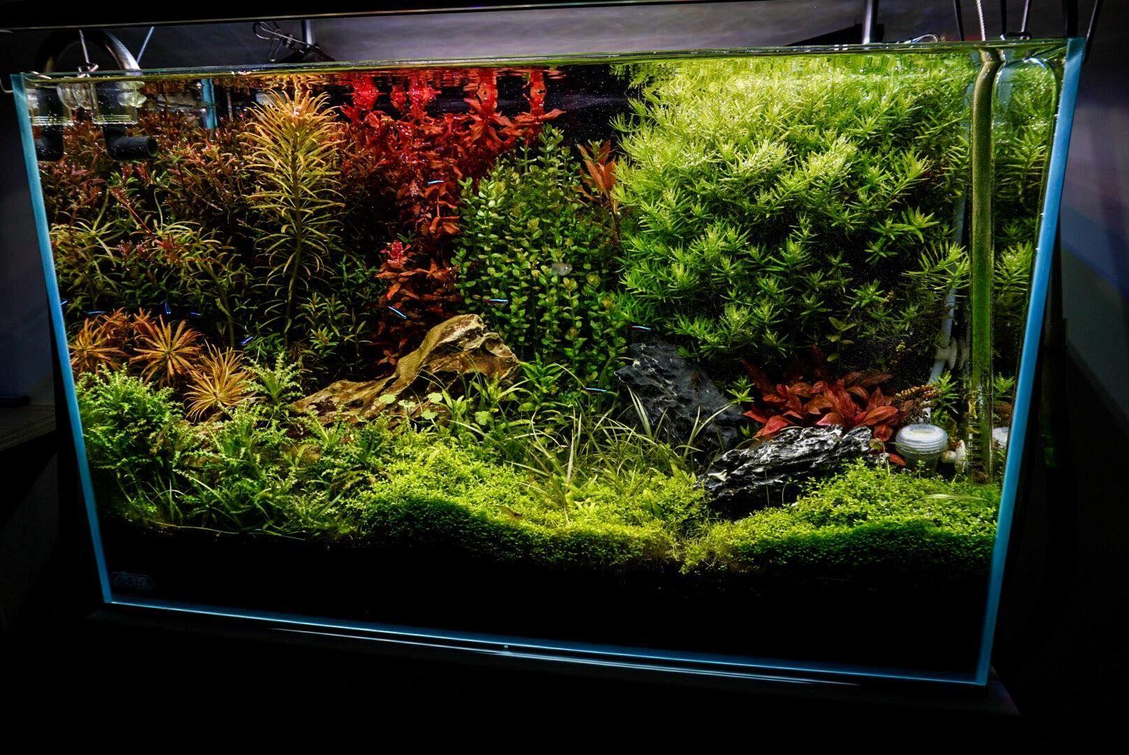 張博修 i am from taiwan and i want to share my aquatic garden