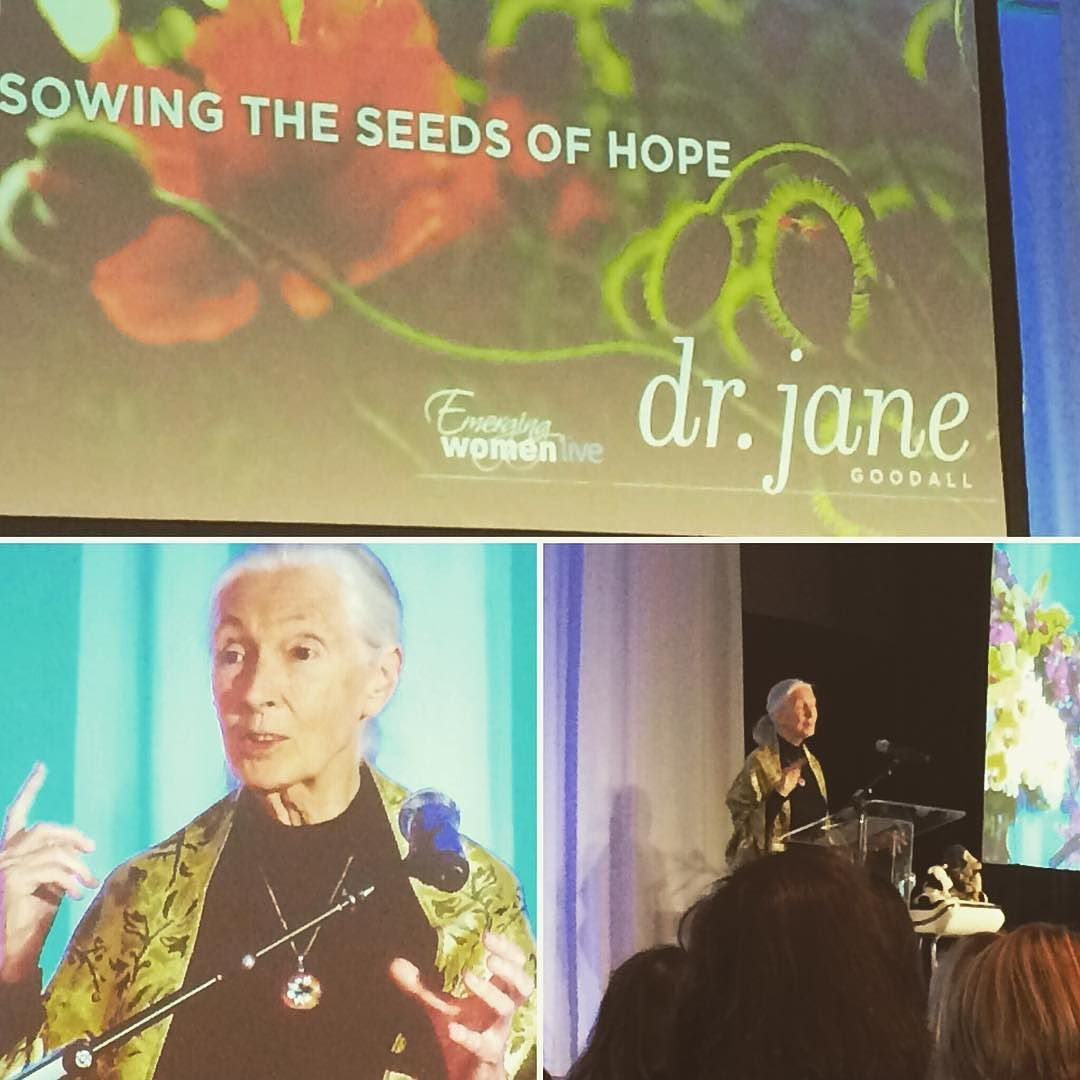 Fantastic start to @emergingw live - the amazing Dr. Jane Goodall. We got to ride in the elevator with her too  #ewlive15 #janegoodall