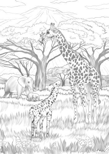 Safari Pritables Coloring Pages Adult Coloring Pages Adult