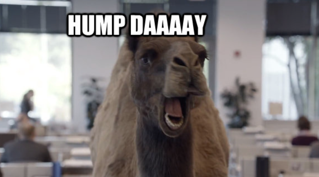 Pin by Rachelle Meyer on Meme Camels funny