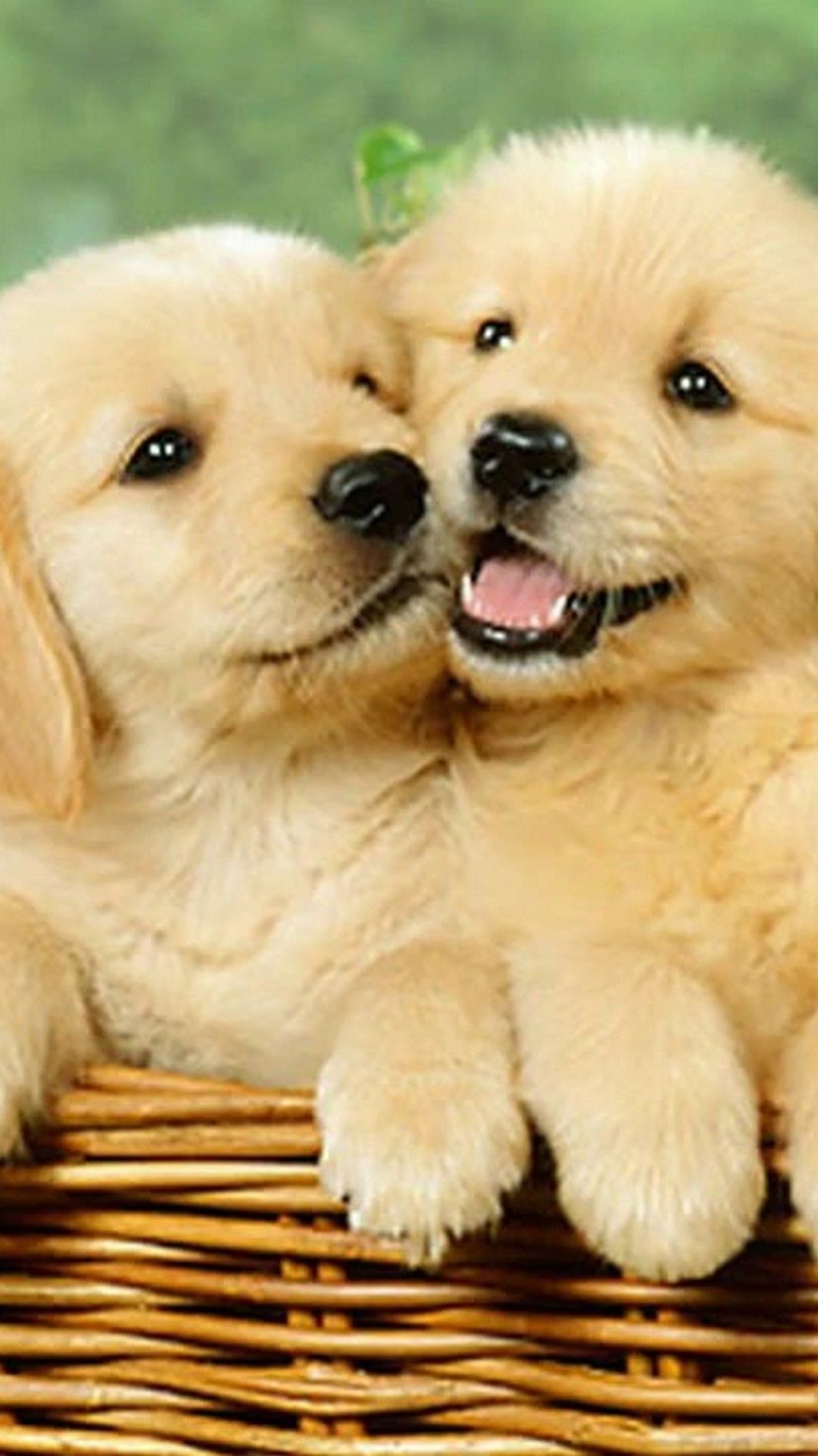 Wallpaper Cute Puppies IPhone