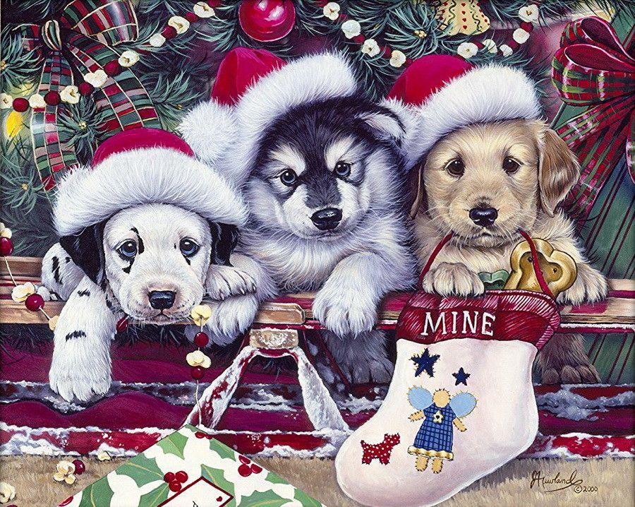 Открытки с собаками новый год, картинки душой