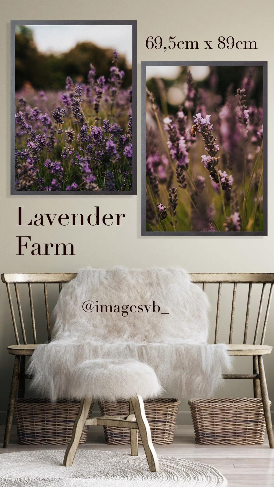 Authentic prints from Lavender Field #photography #photooftheday #printing #prints #printablewallart #wallpapers #wallartdecor #photographers #london #photographerlife #posters #posterart #lavender