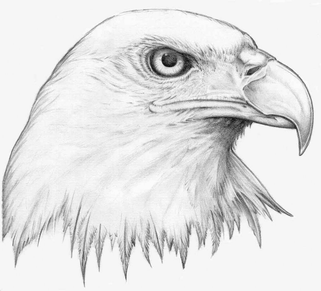 710964425 Drawing Of A Eagle How To Sketch An Eagle In Pencil, Draw An Eagle ...