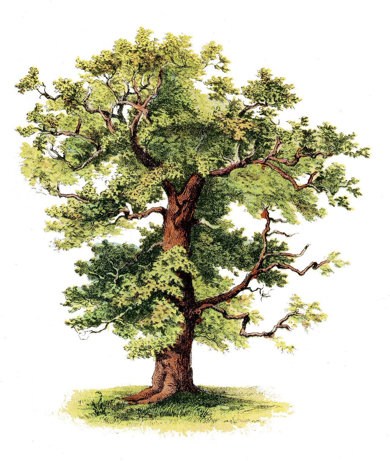 Antique clip art beautiful tree graphics fairy clip for Beautiful drawings of trees