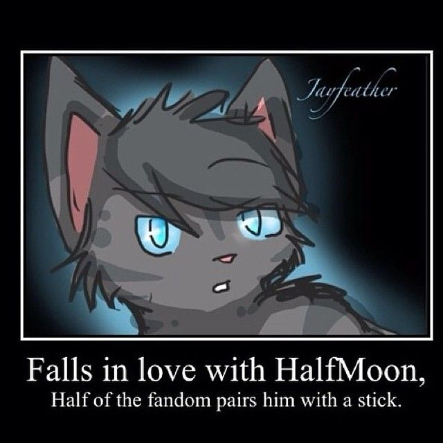 lol i love jayfeather and half moon together but