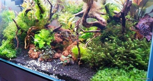Hồ cá thuỷ sinh Setup sẵn 1 tháng tuổi