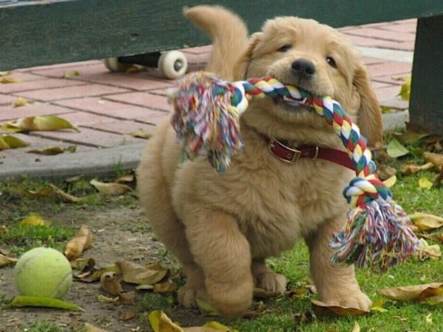 9 Puppies Rockin' That Dadbod Trend | Beautiful and Cute ...
