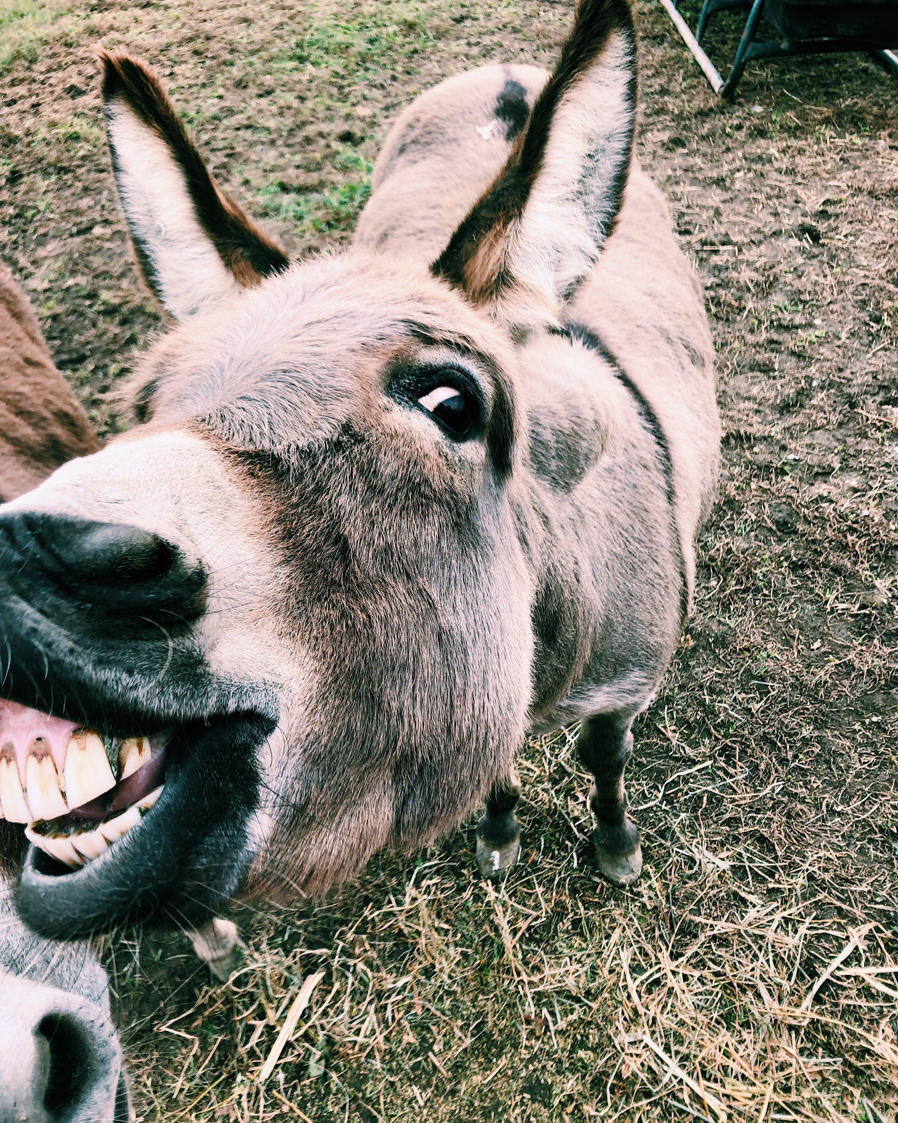 Pin doa daniela em ลиเмลℓร pinterest animals cute animals e